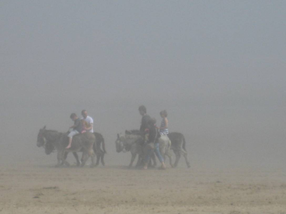 donkeys in the mist